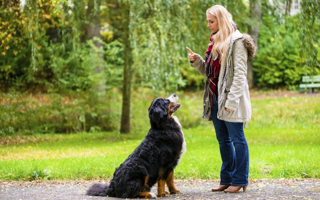 Duluth Dog Trainer offers 5 Quick Tips to Improve Any Beginner's Dog Training Abilities