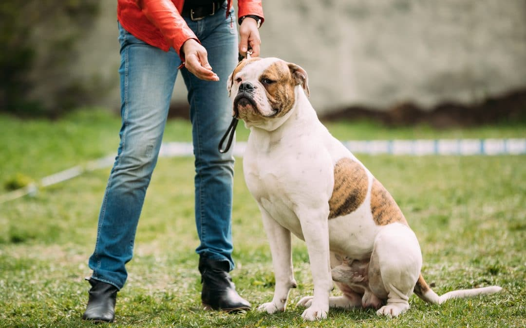 Snellville Dog Trainer Writes About Training Your Dog with Lures & Rewards vs. Bribery