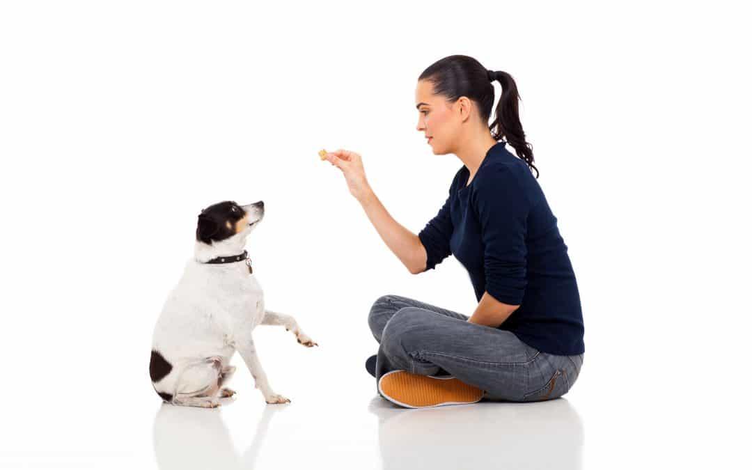 Treats 101 – Utilizing Food Reward to Help Create Positive Associations