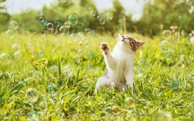 6 Stimulating Cat Activities for Your Home