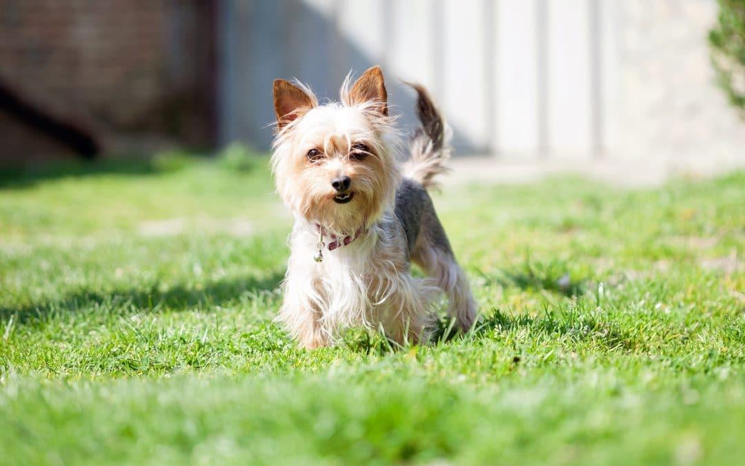 Leaving Your Dog Outside in Gwinnett County
