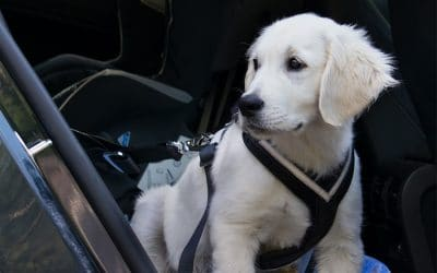 All About Pet Car Safety Harnesses, Crates and Other Restraints