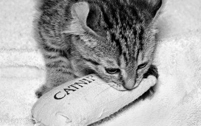 The Catnip Query