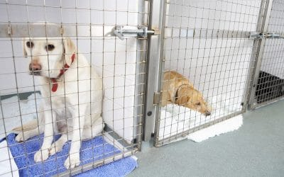 Pet Sitting VS Pet Boarding