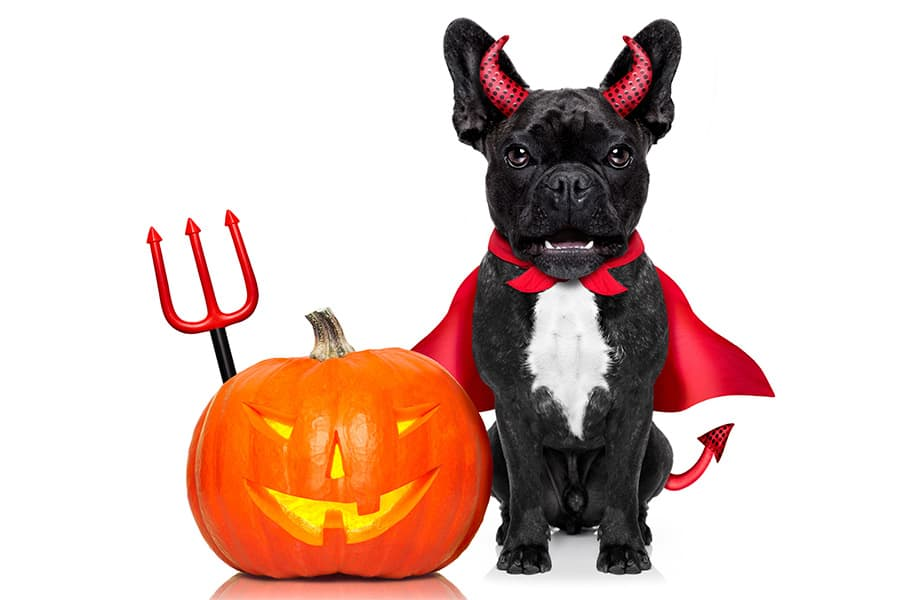 5 Halloween Safety Tips your Dog Can't Live Without
