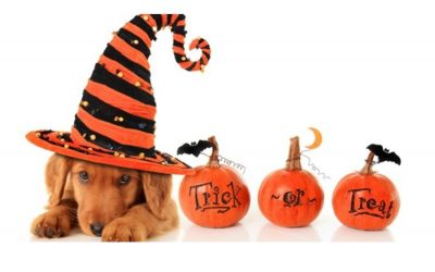 Loganville Pet Sitter Fives Top 3 Halloween Tips for Nervous Dogs