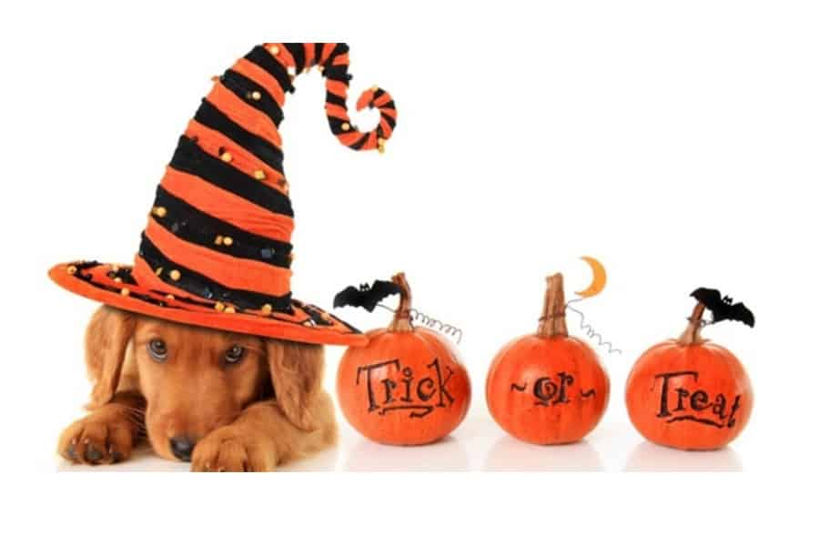 Loganville Pet Sitter Gives Top 3 Halloween Tips For Nervous Dogs