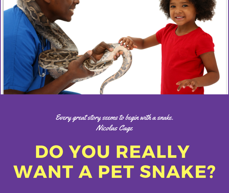 Do you really want a pet snake?