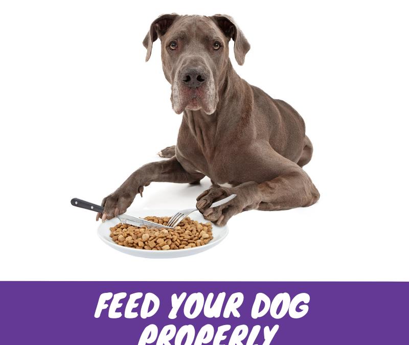 Feeding Your Dog Properly
