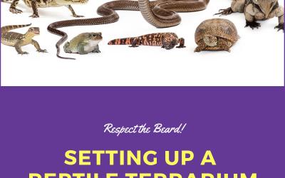 Setting Up a Reptile Terrarium