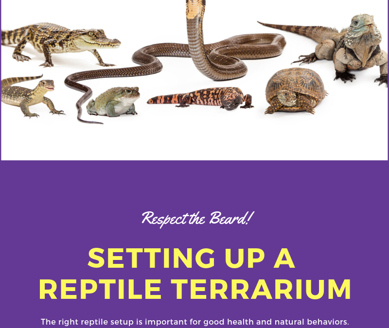 Setting Up a Reptile Terrarium