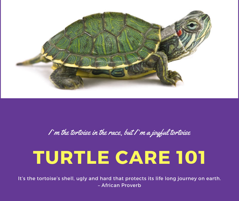 Turtle Care 101: Caring For A Pet Turtle