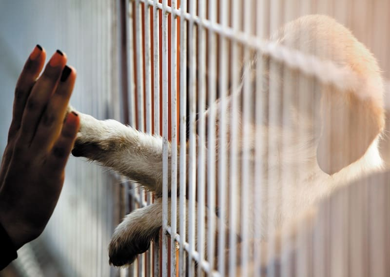 Animal Shelter Misconceptions and Myth Corrections