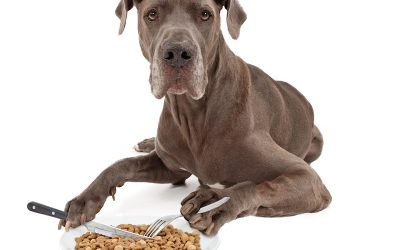 The Benefits of Proper Nutrition For A Dog