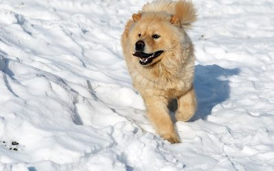 Cold Weather and Your Dog: How to Protect them during Winter months