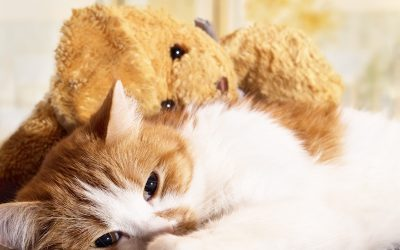 Common Mistakes with Cats and Cold Weather