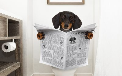 The Importance of Urine In Determining a Pet Health