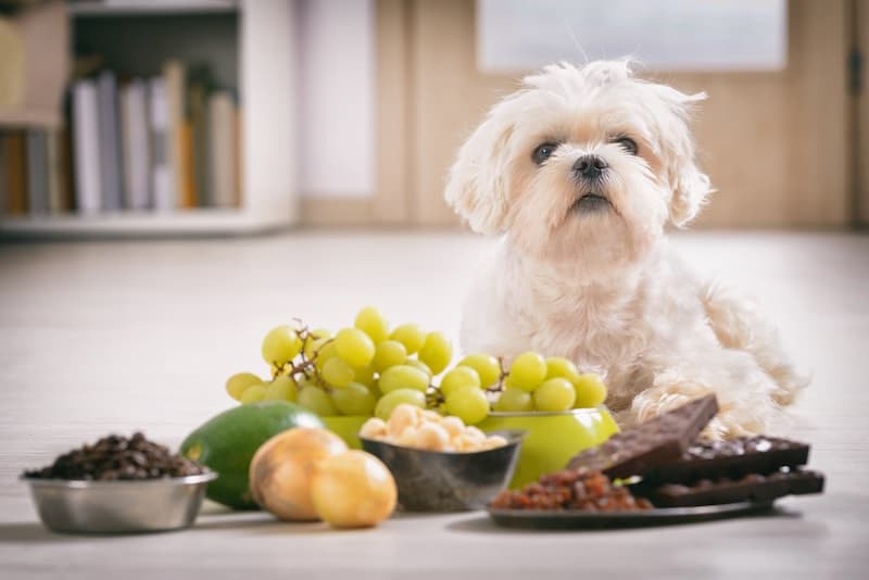 Common Poisons That Can Kill Your Pet