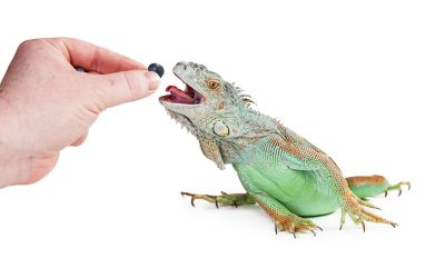 Fruits and Vegetables for Lizards