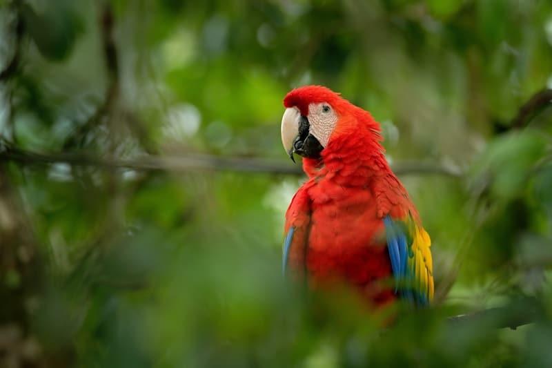 Home Dangers for Pet Birds
