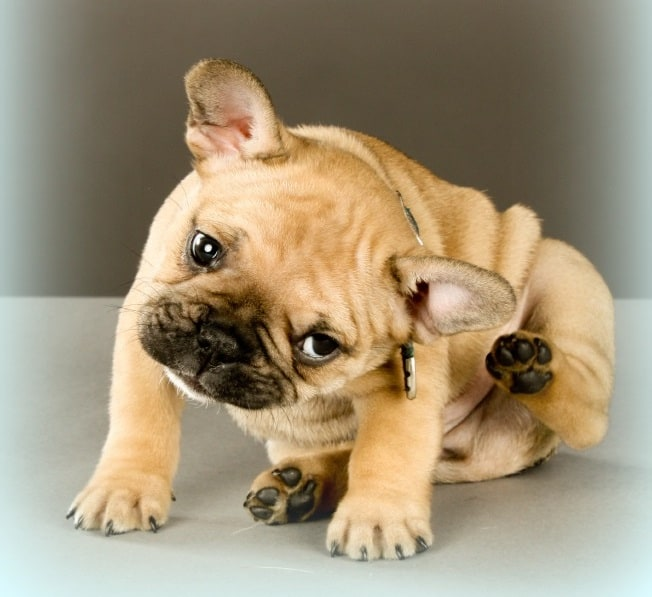 Natural Itch Remedies for Your Dog