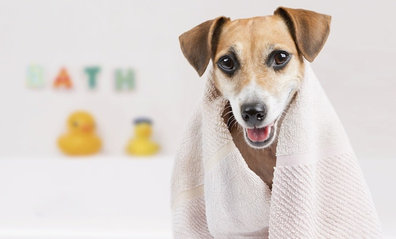 Pet Hygiene and the Importance of It