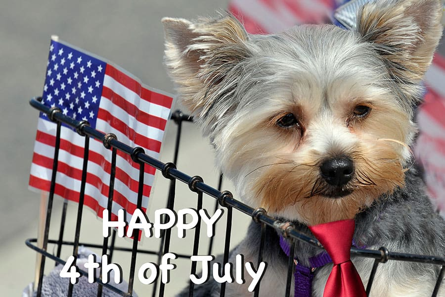 How to Get Your Pet July Fourth Ready