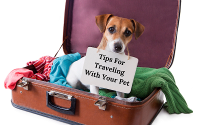 Tip for travelling with your pet