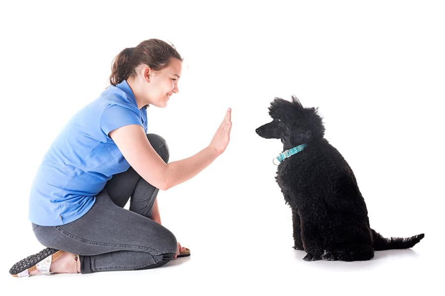 The Best Training Commands For Dogs