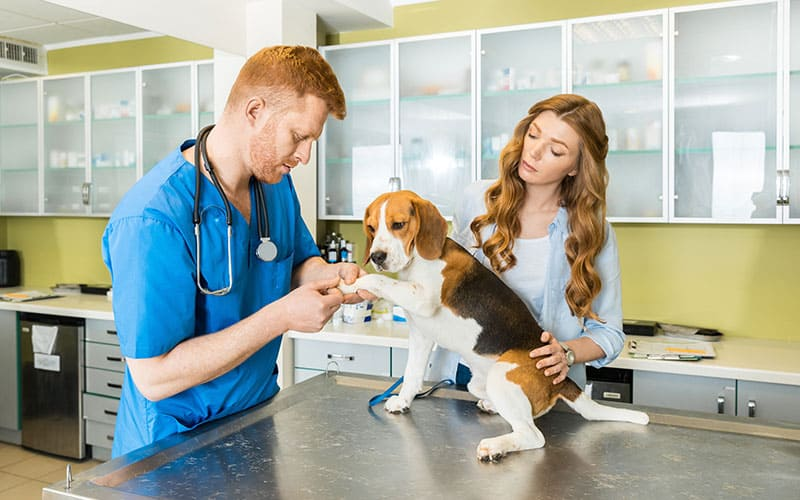 What do I Need to Know About Pet Vaccines?