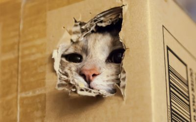 Why Are Cats So Weird? Behaviors Finally Explained