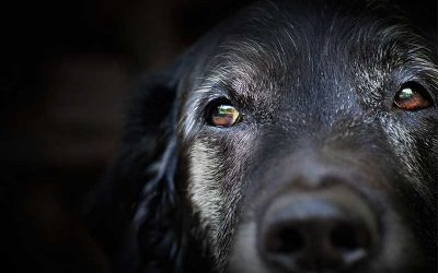 7 Things You Need to Look Out for If You Have an Older Pet