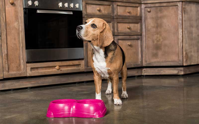 Are Dogs Getting Heart Disease from Grain Free Dog Food?