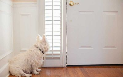Five Steps to Keep Your Dog from Having Separation Anxiety