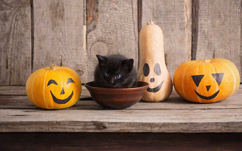 How You Can Celebrate Halloween With Your Pet