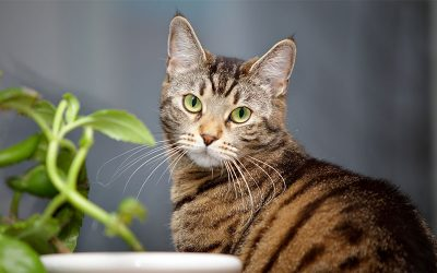 8 Things You Must Consider When Adopting a Cat