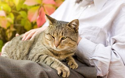 How To Ensure Your Cats Golden Years are the Best