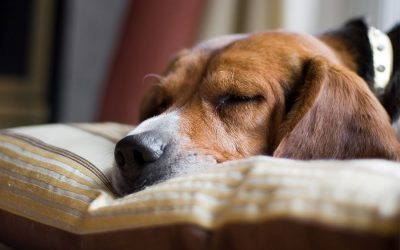 The End of Daylight Savings and your Dog