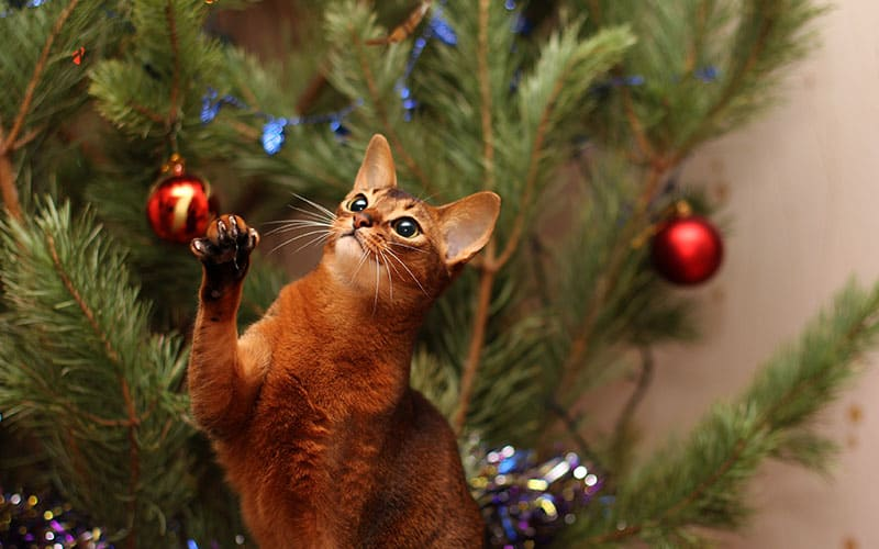 5 Holiday Plants that are Toxic for Pets