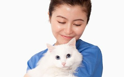 FeLV and FIV Infections in Cats