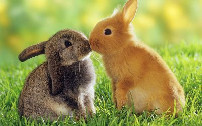 10 Reasons Why Rabbits Are Cool Pets
