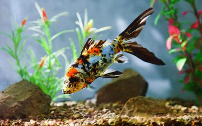 Aquarium Cleaning - Handling Cloudy Aquarium Problems