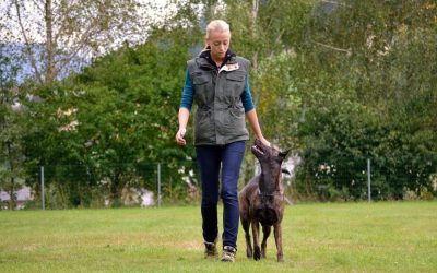 What to Look For in a Dog Trainer