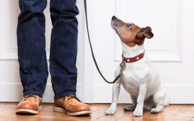 What to Know About Housetraining