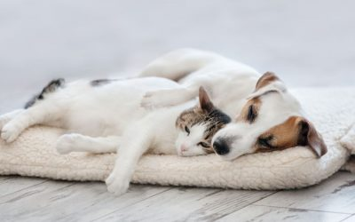 What is the Best Dog For Cats?