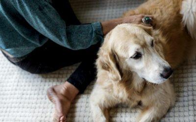 6 Keys to Finding Pet-Friendly Senior Living Communities