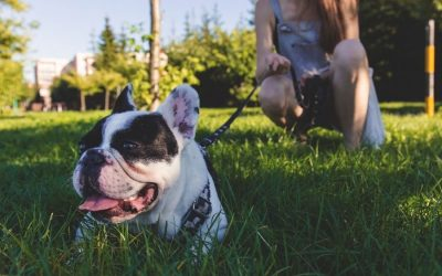 How to Be a Good Dog Owner and Neighbor
