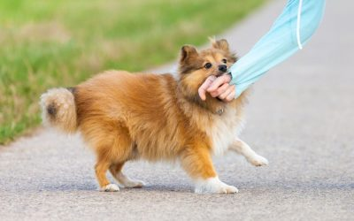 Training Intervention for Reactive Dogs