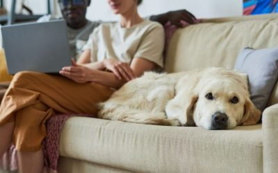 What is Gastric Dilatation and Volvulus in Dogs? How to Keep Your Pup Safe