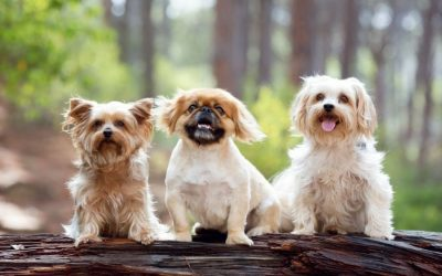 Keeping Small Dogs Healthy